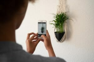 a personal taking a photo of the potted plant